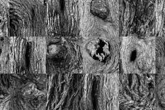 Collage_cortezas-1
